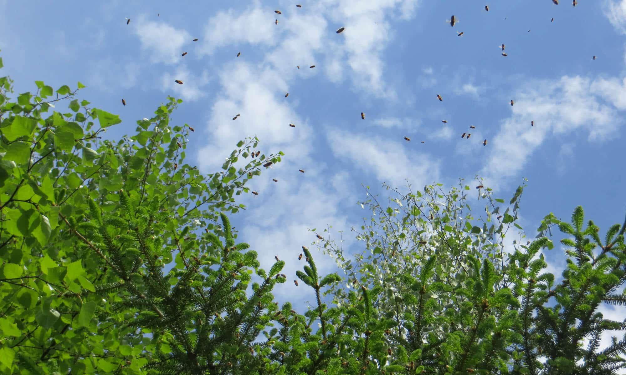 Mehiläisiä metsässä - GOPALA