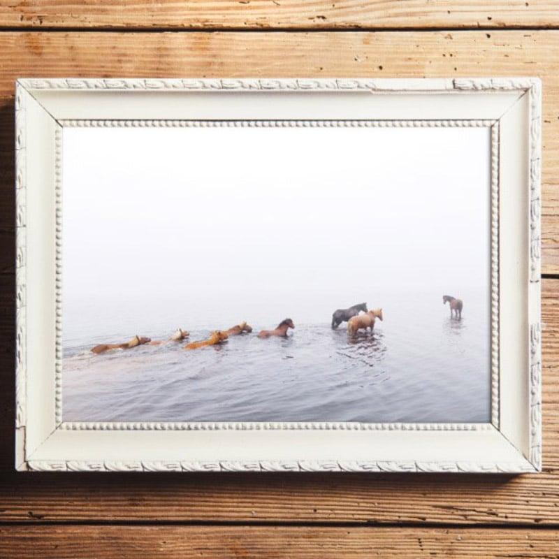 suomehevoset uimassa usvassa valokuvaaja minna kulmala