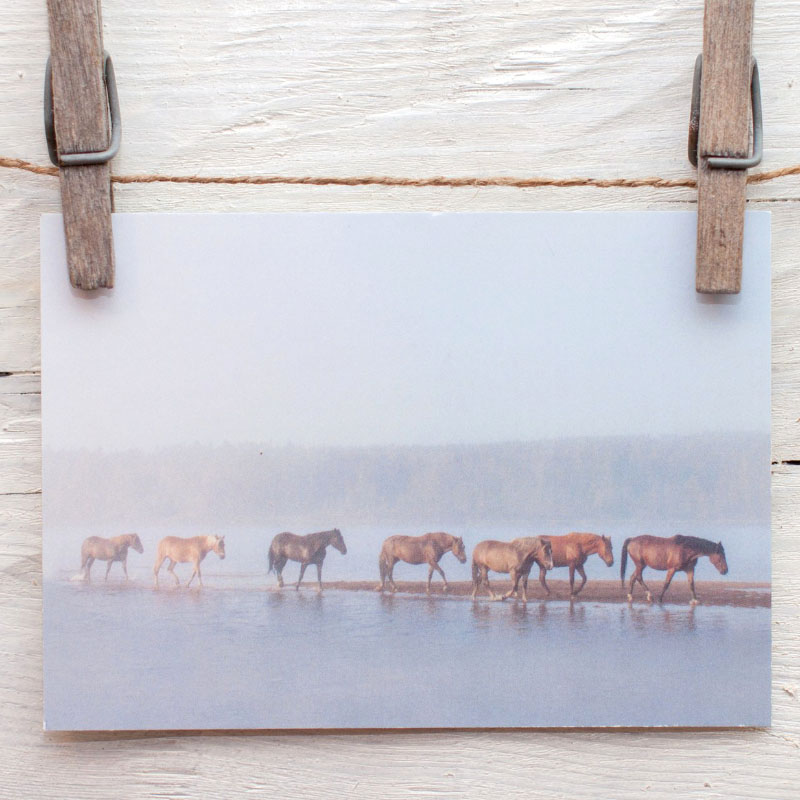suomenhevoset elävät vapaana saarella