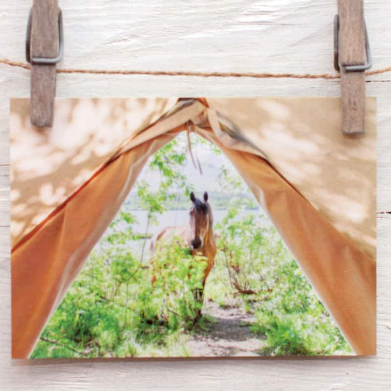 hevonen kurkistaa telttaan
