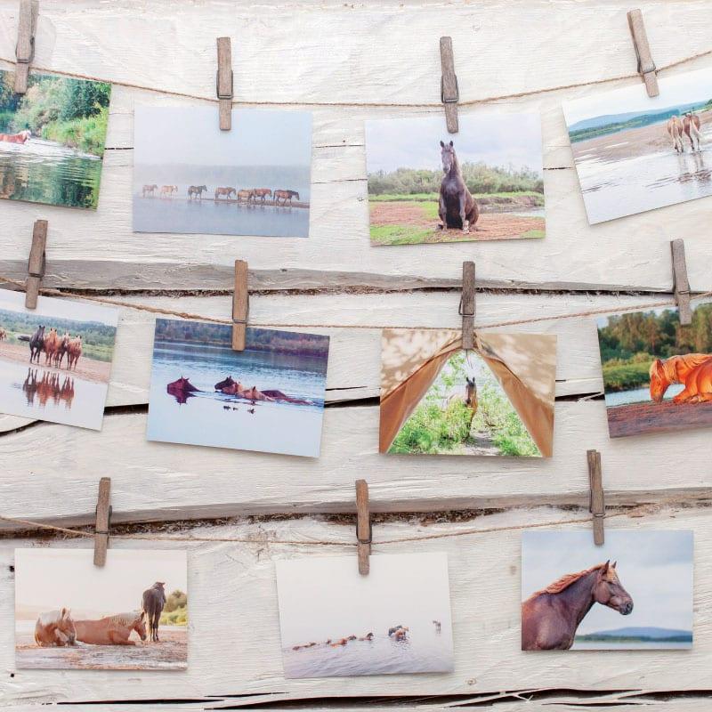 suomenhevosten saari postikortit valokuvaaja minna kulmala
